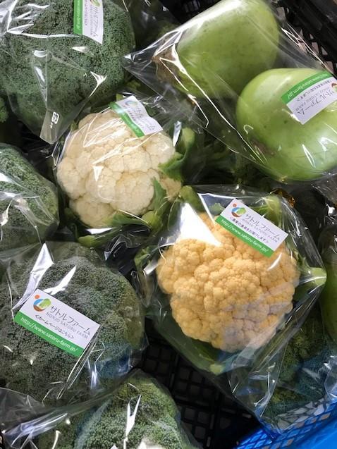17.11.1秋野菜