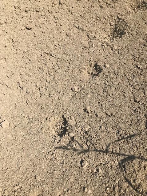 18.7.1都島(神社)足跡